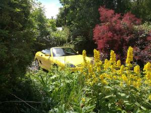 Buttercup in the flowers MG TF 1.6 in Trophy YellowMGFnTFBITZ Customer Cars Gallery